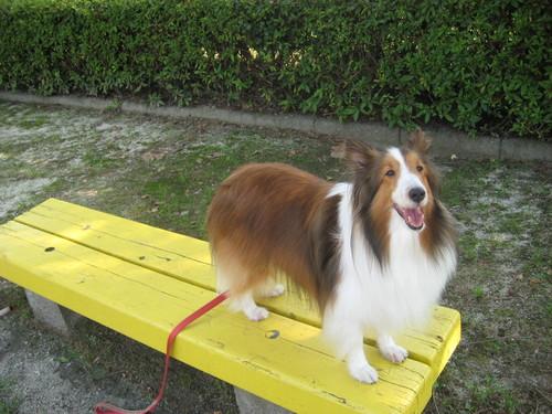 ここにいたってベンチに登るだけなのに~